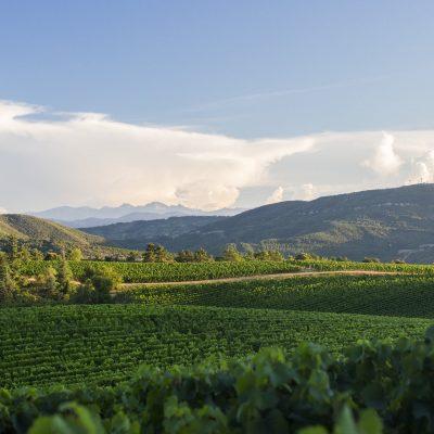 paysage-carcassonne-audetour