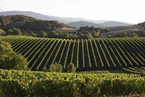 vins du Languedoc