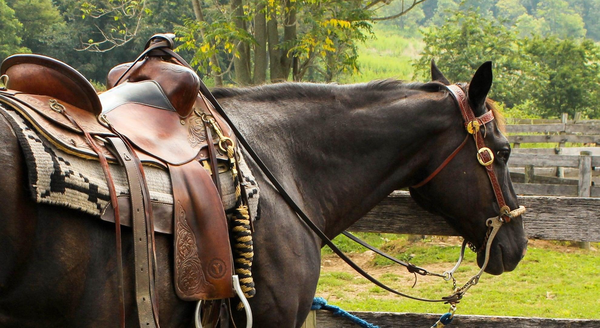 dégustation vin à dos cheval