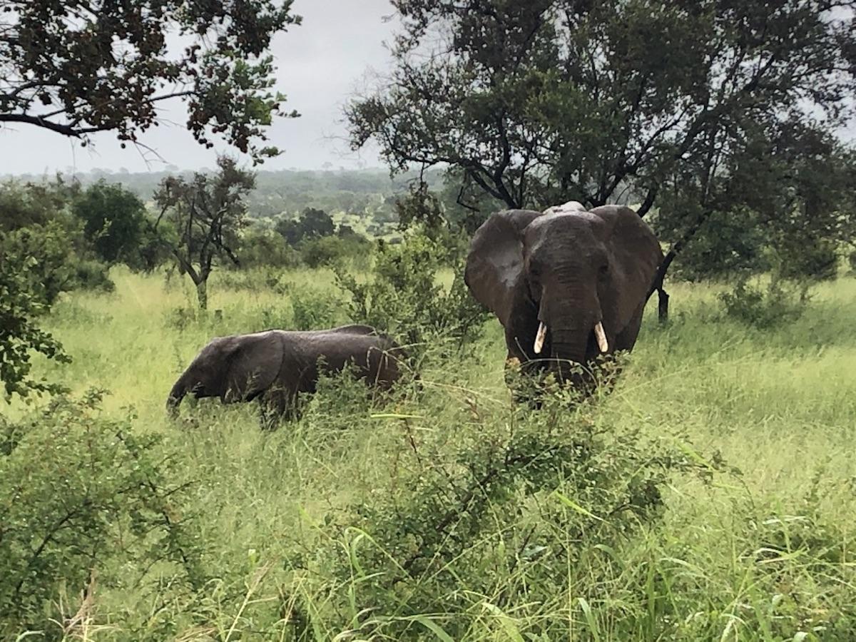 réserve africaine Sigean
