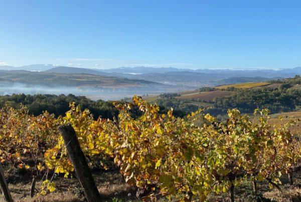 limouxin vignes vins